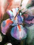 Watercolor τέχνης υγρό πλύσιμο φαντασίας υποβάθρου το αφηρημένο floral θόλωσε το ενιαίο ιώδες μπλε ίριδων άνοιξη διανυσματική απεικόνιση