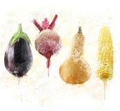 Watercolor φρέσκων λαχανικών Στοκ φωτογραφίες με δικαίωμα ελεύθερης χρήσης