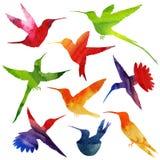 Σκιαγραφία κολιβρίων η διακοσμητική εικόνα απεικόνισης πετάγματος ραμφών το κομμάτι εγγράφου της καταπίνει το watercolor Στοκ Εικόνα