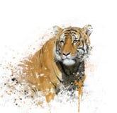 Πορτρέτο Watercolor τιγρών Στοκ φωτογραφίες με δικαίωμα ελεύθερης χρήσης