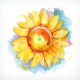 Ηλίανθος ζωγραφικής Watercolor Στοκ φωτογραφίες με δικαίωμα ελεύθερης χρήσης