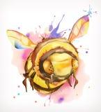 Ζωγραφική Watercolor, μέλισσα μελιού Στοκ Φωτογραφία