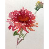 Watercolor abstract background floral flower dahlia beauty decoration hand beautiful wallpaper. Watercolor art abstract background  bright dry brush textured Royalty Free Stock Photo