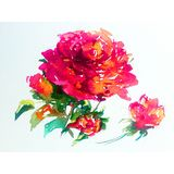 Watercolor abstract background floral flower rose beauty decoration hand beautiful wallpaper. Watercolor art abstract background bright dry brush textured Stock Images