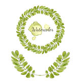 Watercolor acacia leaves decoration. Round frame . Hand drawn vector wreath. Royalty Free Stock Image