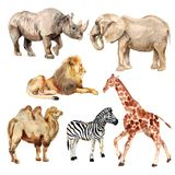 Watercolor african animals Royalty Free Stock Image