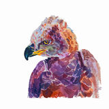 Watercolor of African crowned eagle on white Royalty Free Stock Image