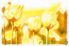Watercolor akvarel paint effect of spring yellow tulips Royalty Free Stock Photo