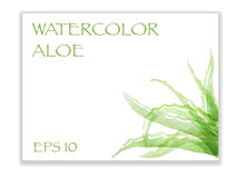 Watercolor aloe in corner Royalty Free Stock Images