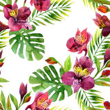 Watercolor Alstroemeria  flowers seamless pattern. Stock Images