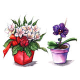 Watercolor alstroemeria rose orchid bouquets in pots Stock Photo