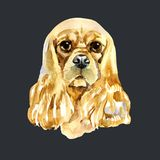 Watercolor American Cocker Spaniel Stock Photos