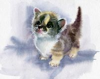Watercolor Animal Collection: Kitten Royalty Free Stock Photography