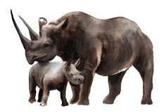 Watercolor animals - black rhino with a kid. Sketch royalty free illustration