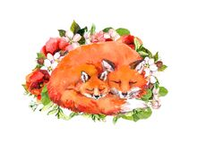 Watercolor animals foxes sleeping in flowers. Mother and child. Illustration for Mothers day