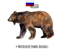 Watercolor animals. Pets illustrations.Cute wild bear.Watercolor Russia symbol. Art illustration of a braun bear silhouette isolated on a white background Royalty Free Stock Images