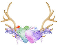 Watercolor antler with succulent Royalty Free Stock Images