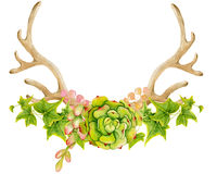 Watercolor antler with succulent, cactus, and leaves. Stock Photos