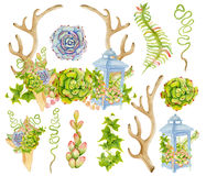 Watercolor antler with succulent and fern bouquet in the blue lantern. Stock Photography