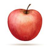 Watercolor Apple Στοκ φωτογραφία με δικαίωμα ελεύθερης χρήσης