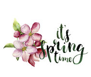 Watercolor apple blossom and It`s spring time lettering. Hand painted floral botanical illustration isolated on white Royalty Free Stock Image