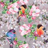 Watercolor flowers apple with bird Bullfinch. Floral seamless pattern on a gray background. Watercolor apple  branch  floral seamless pattern design Stock Photo