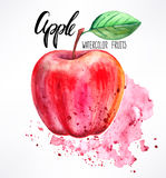 Watercolor apple. Delicious ripe watercolor apple. hand-drawn illustration Royalty Free Stock Photo