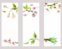 Watercolor apple flowers Royalty Free Stock Photography