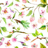 Watercolor apple flowers seamless pattern Stock Photos