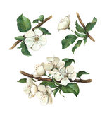 Watercolor apple flowers set stock illustration