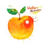 Watercolor apple Royalty Free Stock Image