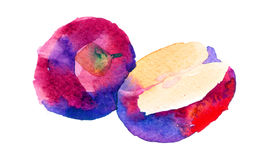 Watercolor apple illustration. Illustration of apples, executed in watercolor Royalty Free Stock Photography