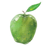 Watercolor apple Stock Photography