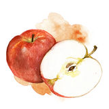 Watercolor apple illustration. Hand painted watercolor artistic apple illustration with decorative stain on white background stock illustration