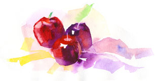 Watercolor apple illustration. Light sketch of apples done in watercolors royalty free illustration