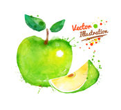 Watercolor apple Royalty Free Stock Photography