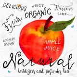 Watercolor apple Stock Photos