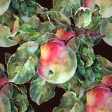 Watercolor apples on a branch. Floral seamless pattern. Black background. Watercolor apple branch background fruit handiwork design floral leaf green Royalty Free Stock Photo