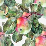 Watercolor apples on a branch. Floral seamless pattern. Gray background. Watercolor apple branch background fruit handiwork design floral leaf green Royalty Free Stock Images