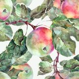 Watercolor apples on a branch. Floral seamless pattern. White background. Watercolor apple branch background fruit handiwork design floral leaf green Royalty Free Stock Images