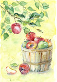 Watercolor apples on branch. With green leaves and in basket on yellow background Royalty Free Stock Images
