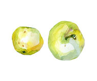 Watercolor apples. Watercolor two apples on white Royalty Free Stock Image