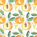 Watercolor apricot fruit illustration. Stock Photos