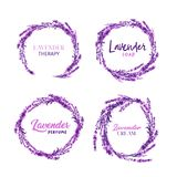 Watercolor or Aquarelle Paintings of Lavender Vector royalty free illustration