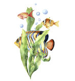 Watercolor aquarium card with fish. Hand painted underwater print with tropical fish, seaweed branch and air bubbles. Isolated on white background. Illustration Royalty Free Stock Photography