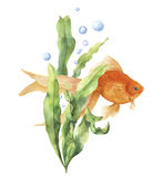 Watercolor aquarium card. Hand painted underwater print with goldfish, seaweed branch and air bubbles isolated on white Stock Images