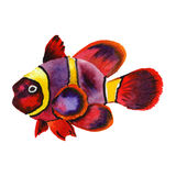 Watercolor aquatic underwater colorful tropical fish set. Red sea and exotic fishes inside. Aquarelle elements for background, texture, wrapper pattern Royalty Free Stock Images