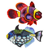 Watercolor aquatic underwater colorful tropical fish set. Red sea and exotic fishes inside. Aquarelle elements for background, texture, wrapper pattern Royalty Free Stock Image