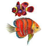 Watercolor aquatic underwater colorful tropical fish set. Red sea and exotic fishes inside. Aquarelle elements for background, texture, wrapper pattern Stock Image