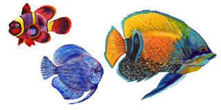 Watercolor aquatic underwater colorful tropical fish set. Red sea and exotic fishes inside. Aquarelle elements for background, texture, wrapper pattern Stock Images